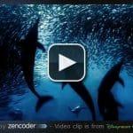 VideoJS : un lecteur HTML5 révolutionnaire